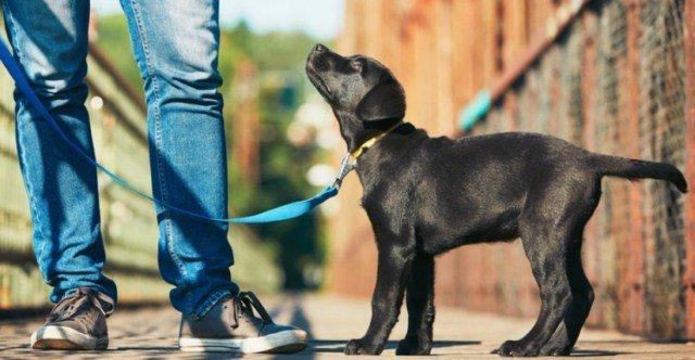 wyprowadzanie-psów-na-spacer