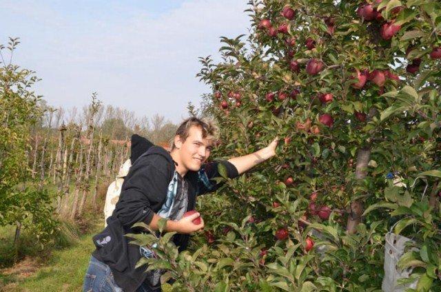 zarabianie-na-zbieraniu-owoców