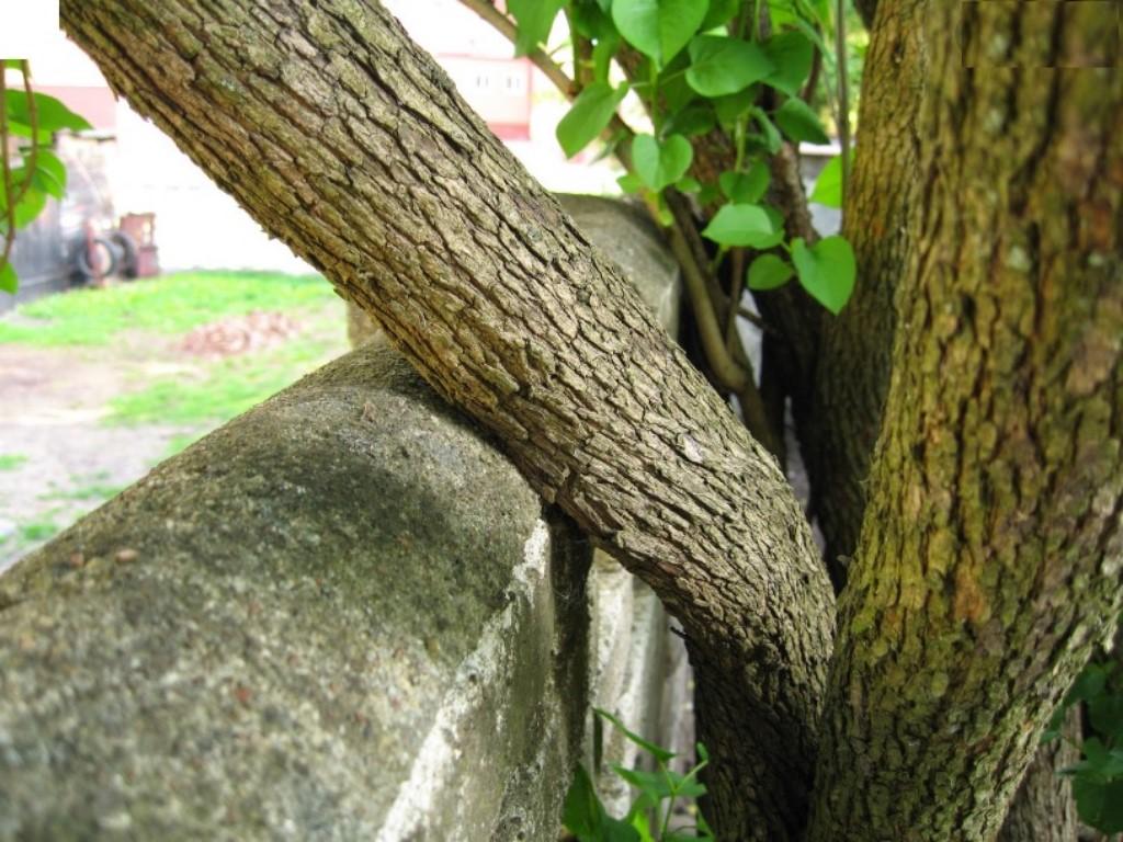 drzewo-sasiada-na-moja-dzialke-jak-usunac